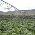 A commercial farm using irrigation