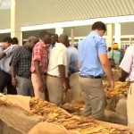 Global buyers at a Zimbabwean tobacco auction floor